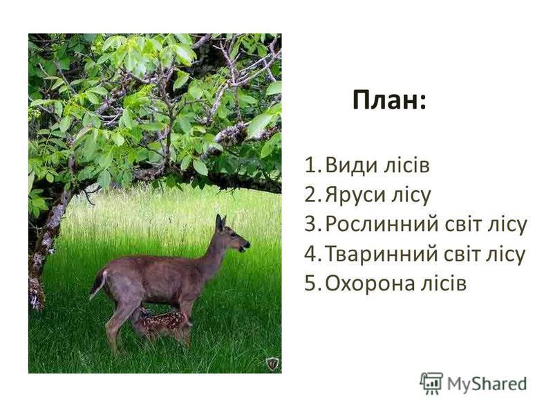 План: 1.Види лісів 2.Яруси лісу 3.Рослинний світ лісу 4.Тваринний світ лісу 5.Охорона лісів