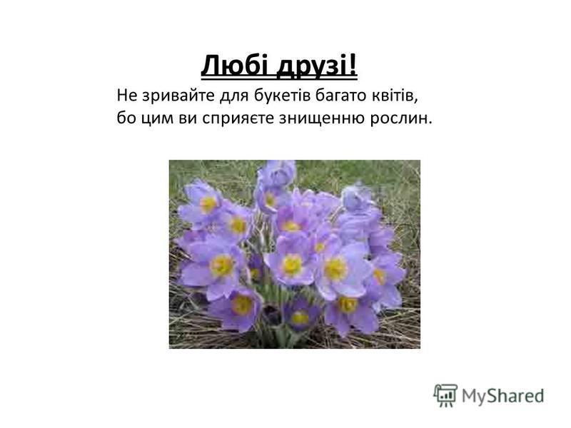 Любі друзі! Не зривайте для букетів багато квітів, бо цим ви сприяєте знищенню рослин.