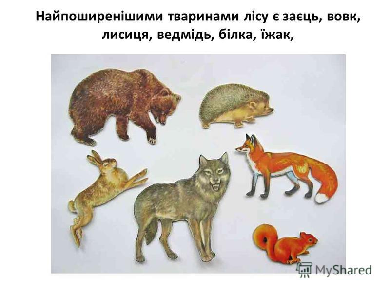 Найпоширенішими тваринами лісу є заєць, вовк, лисиця, ведмідь, білка, їжак,