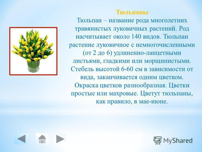 Тюльпаны Одуванчик Крокус