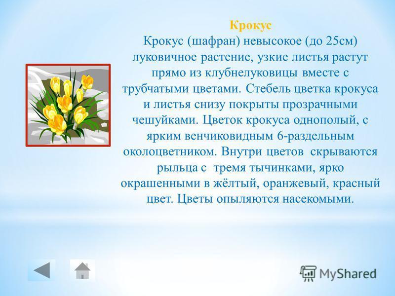 Одуванчик Одуванчик растение с ветвистым, стержневым корнем толщиной около 2 см и длиной около 60 см, в верхней части переходящим в короткое многоглавое корневище. Листья голые, перисто-надрезанные или цельные, собранные в прикорневую розетку. Цветёт