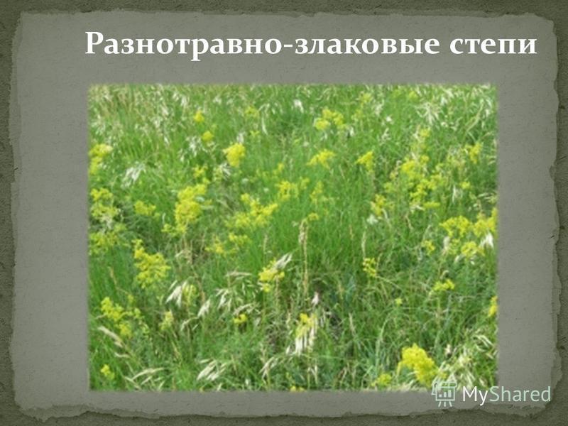 Разнотравно-злаковые степи
