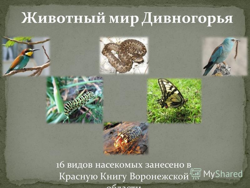 Животный мир Дивногорья 16 видов насекомых занесено в Красную Книгу Воронежской области
