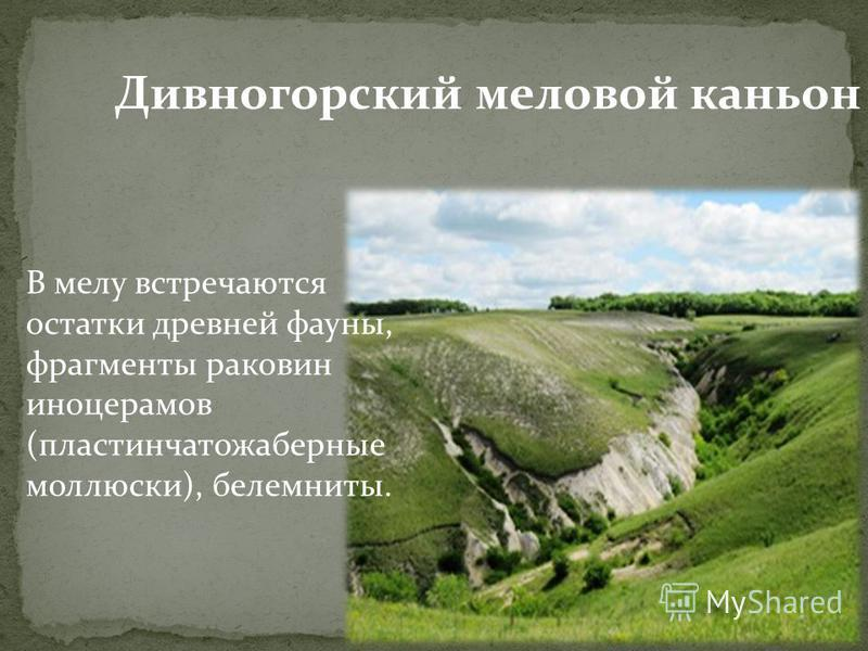 Дивногорский меловой каньон В мелу встречаются остатки древней фауны, фрагменты раковин иноцерамов (пластинчатожаберные моллюски), белемниты.
