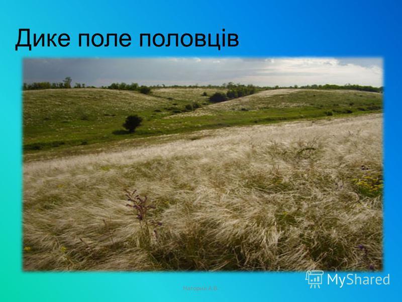 Дике поле половців Нагорна А.В.