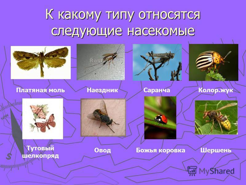 К какому типу относятся следующие насекомые Платяная моль НаездникСаранча Колор.жук Тутовый шелкопряд Овод Божья коровка Шершень