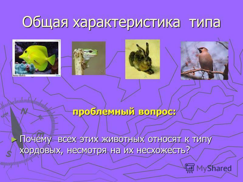 Общая характеристика типа проблемный вопрос: Почему всех этих животных относят к типу хордовых, несмотря на их несхожесть?