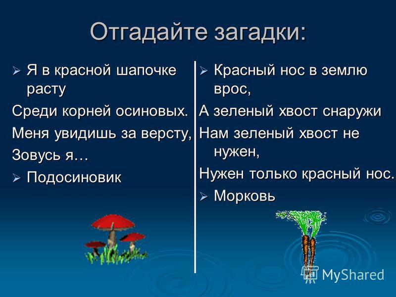 Отгадайте загадки: Я в красной шапочке расту Я в красной шапочке расту Среди корней осиновых. Меня увидишь за версту, Зовусь я… Подосиновик Подосиновик Красный нос в землю врос, Красный нос в землю врос, А зеленый хвост снаружи Нам зеленый хвост не н