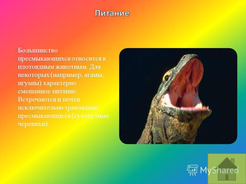 Большинство пресмыкающихся относится к плотоядным животным. Для некоторых (например, агамы, игуаны) характерно смешанное питание. Встречаются и почти исключительно травоядные пресмыкающиеся (сухопутные черепахи).