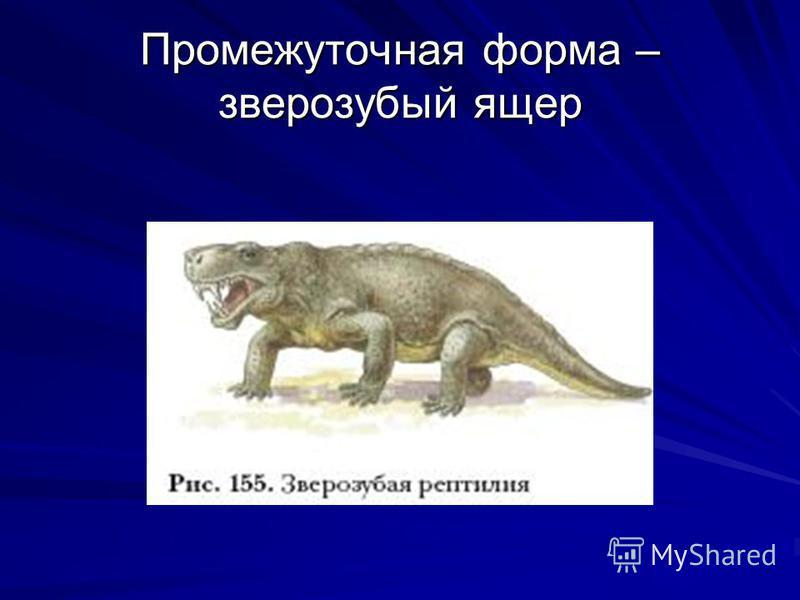 Промежуточная форма – зверозубый ящер