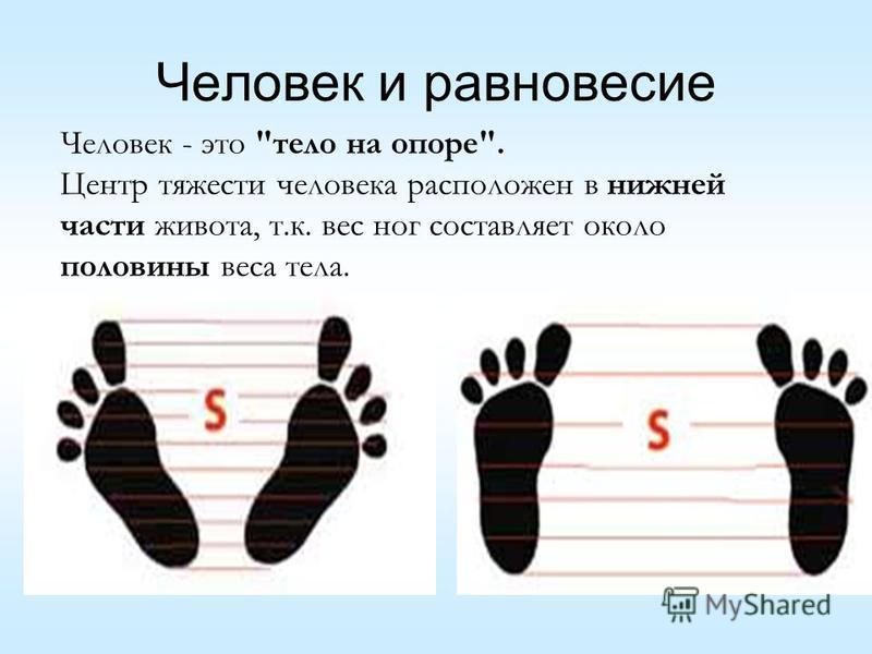 Человек и равновесие Человек - это тело на опоре. Центр тяжести человека расположен в нижней части живота, т.к. вес ног составляет около половины веса тела.