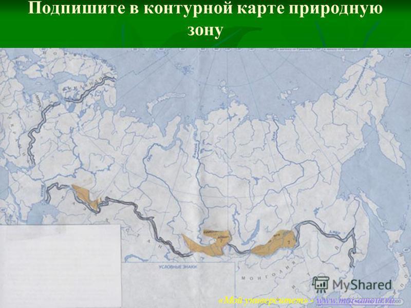 «Мой университет – www.moi-amour.ru Подпишите в контурной карте природную зону «Мой университет» - www.moi-amour.ruwww.moi-amour.ru