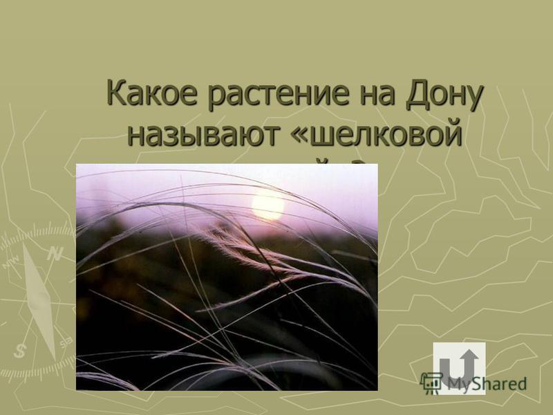 Какое растение на Дону называют «шелковой травой»?