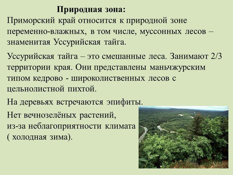 Природная зона: Приморский край относится к природной зоне переменно-влажных, в том числе, муссонных лесов – знаменитая Уссурийская тайга. Уссурийская тайга – это смешанные леса. Занимают 2/3 территории края. Они представлены маньчжурским типом кедро