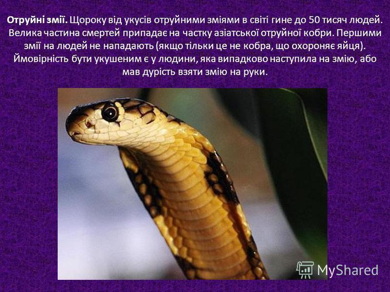 Отруйні змії. Отруйні змії. Щороку від укусів отруйними зміями в світі гине до 50 тисяч людей. Велика частина смертей припадає на частку азіатської отруйної кобри. Першими змії на людей не нападають (якщо тільки це не кобра, що охороняє яйця). Ймовір