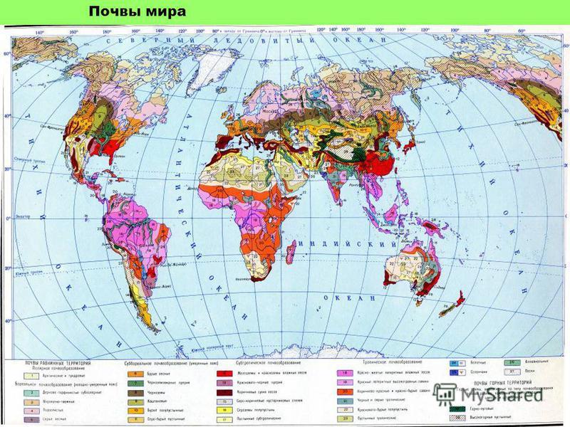 Почвы мира