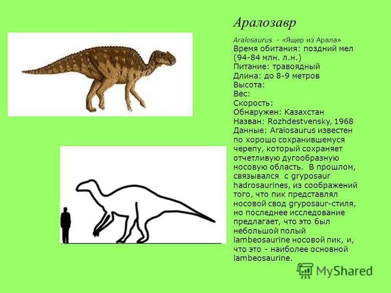 Аралозавр Aralosaurus - «Ящер из Арала» Время обитания: поздний мел (94-84 млн. л.н.) Питание: травоядный Длина: до 8-9 метров Высота: Вес: Скорость: Обнаружен: Казахстан Назван: Rozhdestvensky, 1968 Данные: Aralosaurus известен по хорошо сохранившем