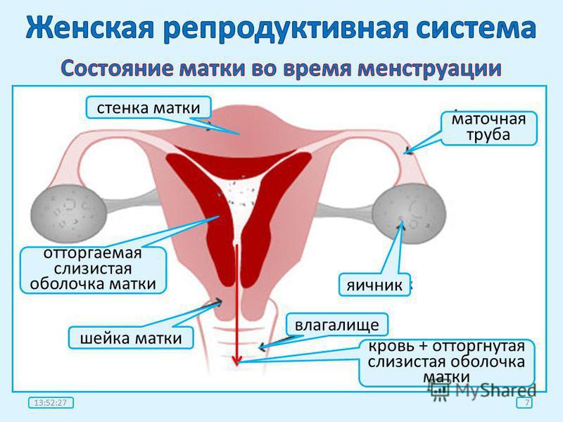 kakoe-rasstoyanie-prohodit-spermatozoid