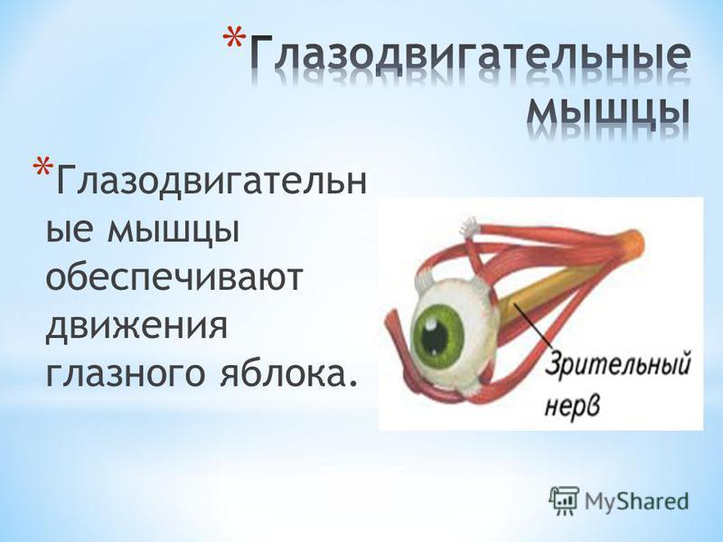 * Глазодвигательн ые мышцы обеспечивают движения глазного яблока.