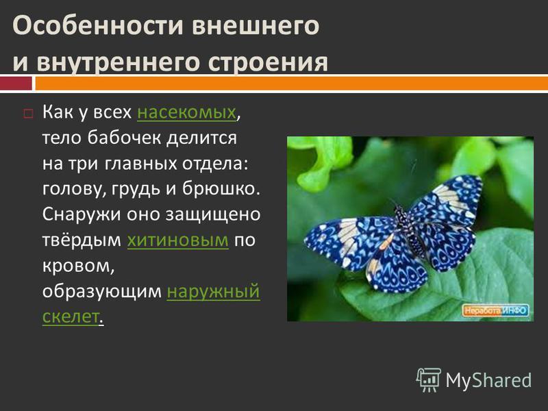Характерные черты Главный отличительный признак бабочек мельчайшие чешуйки на крыльях. А также свёртывающийся тонкий хоботок, используемый бабочками для питания. Чешуйки на крыльях бабочки