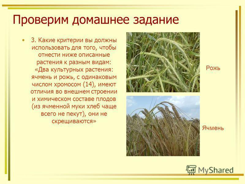 Проверим домашнее задание 3. Какие критерии вы должны использовать для того, чтобы отнести ниже описанные растения к разным видам: «Два культурных растения: ячмень и рожь, с одинаковым числом хромосом (14), имеют отличия во внешнем строении и химичес