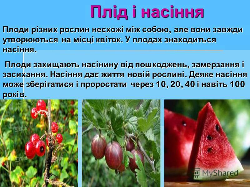 Плід і насіння Плоди різних рослин несхожі між собою, але вони завжди утворюються на місці квіток. У плодах знаходиться насіння. Плоди захищають насінину від пошкоджень, замерзання і засихання. Насіння дає життя новій рослині. Деяке насіння може збер