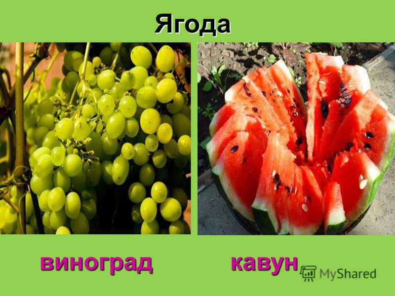 Ягода виноград кавун