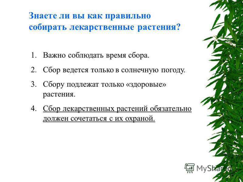 Знаете ли вы как правильно собирать лекарственные растения? 1. Важно соблюдать время сбора. 2. Сбор ведется только в солнечную погоду. 3. Сбору подлежат только «здоровые» растения. 4. Сбор лекарственных растений обязательно должен сочетаться с их охр