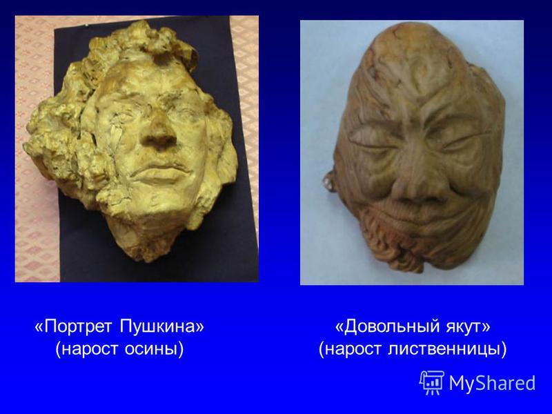 «Портрет Пушкина» (нарост осины) «Довольный якут» (нарост лиственницы)