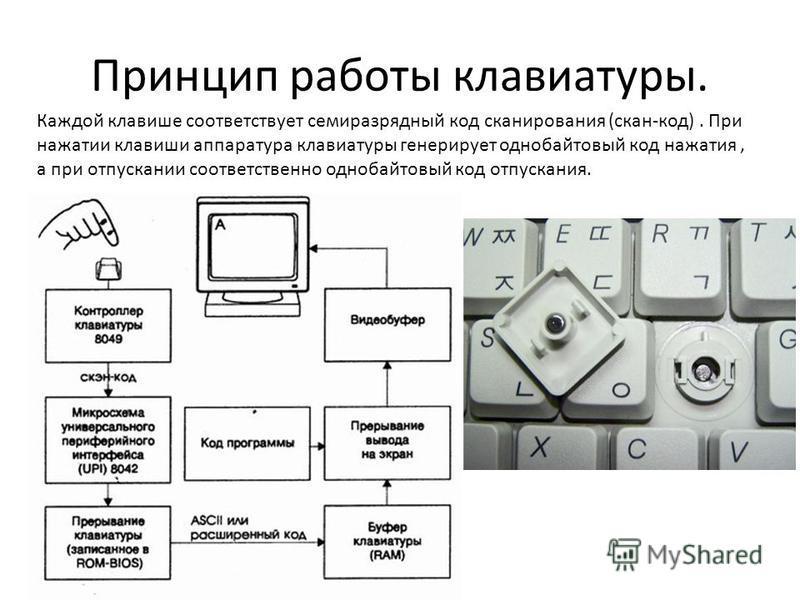 Принцип работы клавиатуры. Каждой клавише соответствует семиразрядный код сканирования (скан-код). При нажатии клавиши аппаратура клавиатуры генерирует однобайтовый код нажатия, а при отпускании соответственно однобайтовый код отпускания.