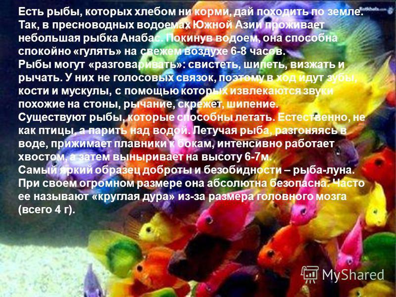Есть рыбы, которых хлебом ни корми, дай походить по земле. Так, в пресноводных водоемах Южной Азии проживает небольшая рыбка Анабас. Покинув водоем, она способна спокойно «гулять» на свежем воздухе 6-8 часов. Рыбы могут «разговаривать»: свистеть, шип