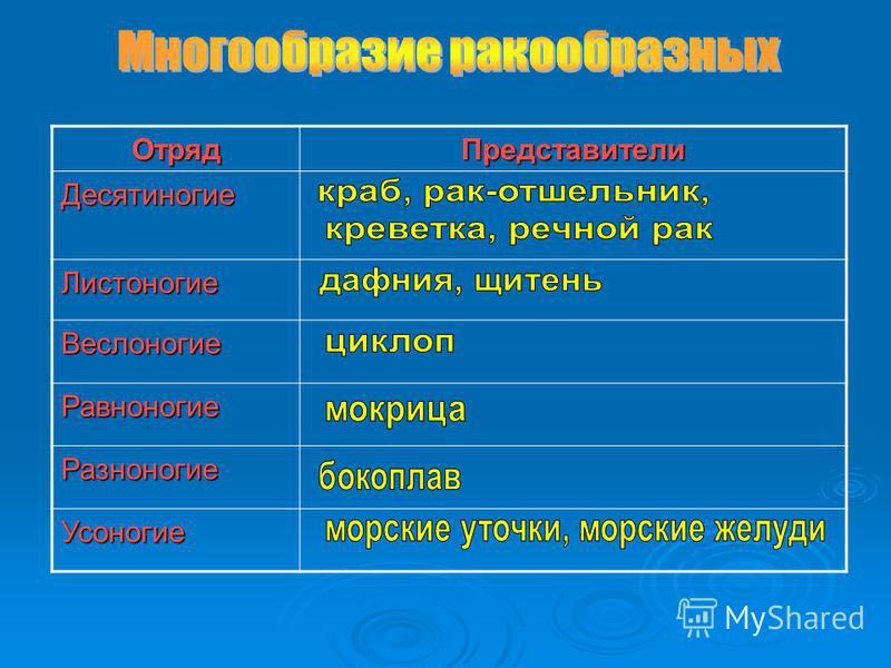 Отряд ПредставителиДесятиногие Листоногие Веслоногие Равноногие Разноногие Усоногие