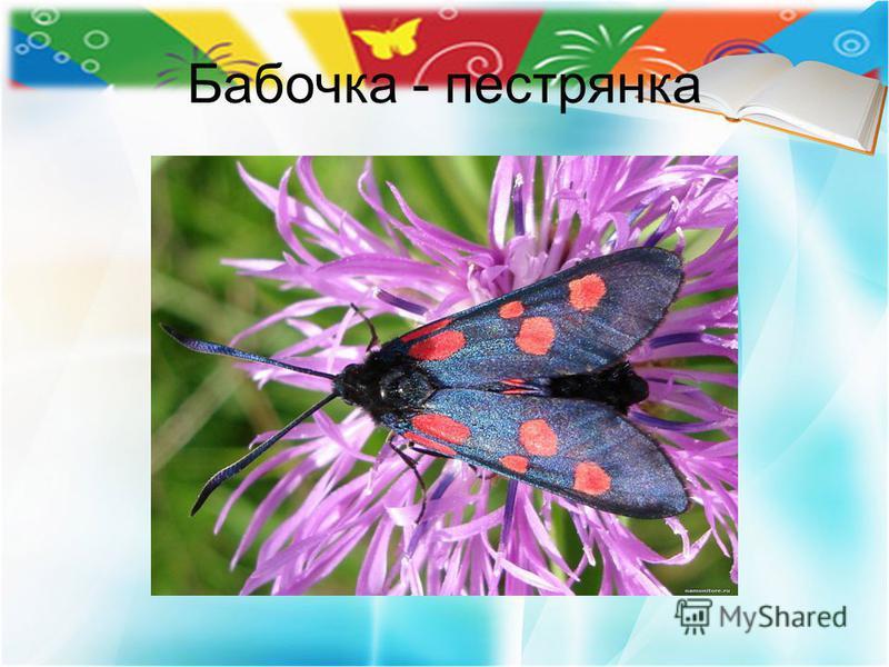 Бабочка - пестрянка