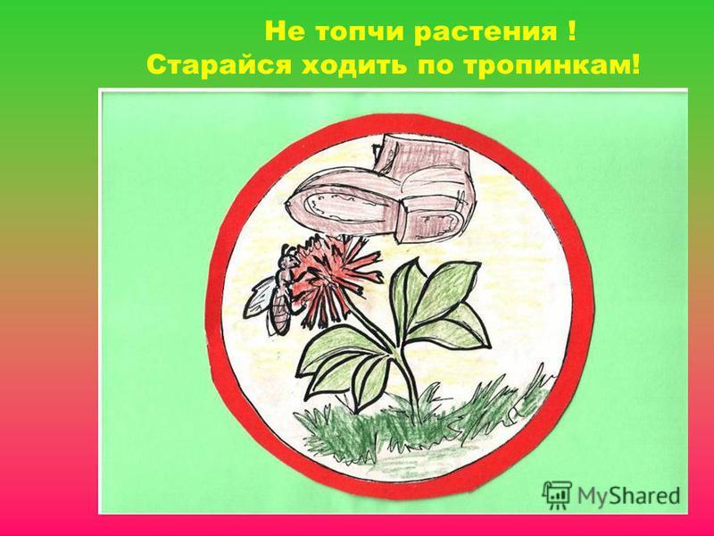 Не топчи растения ! Старайся ходить по тропинкам!