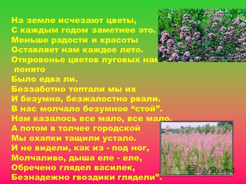 На земле исчезают цветы, С каждым годом заметнее это. Меньше радости и красоты Оставляет нам каждое лето. Откровенье цветов луговых нами понято Было едва ли. Беззаботно топтали мы их И безумно, безжалостно рвали. В нас молчало безумное стой. Нам каза