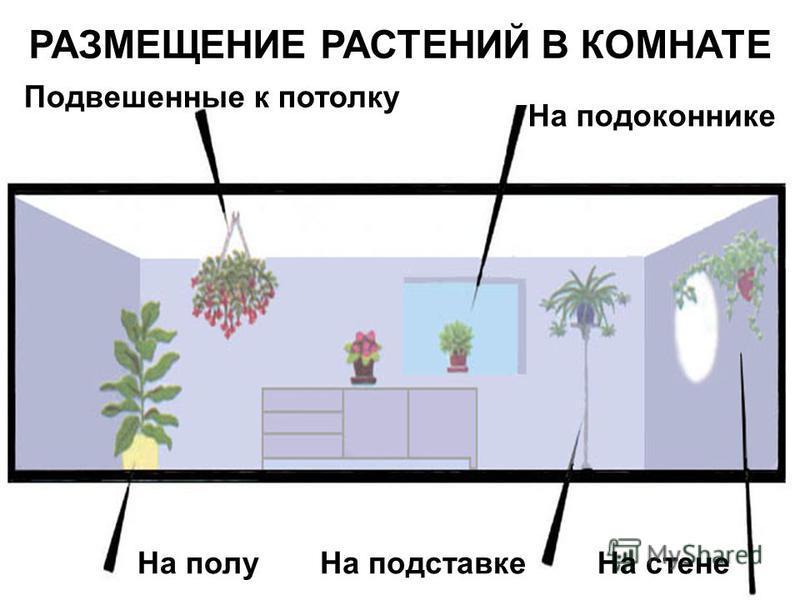 РАЗМЕЩЕНИЕ РАСТЕНИЙ В КОМНАТЕ На полу На подставке На стене На подоконнике Подвешенные к потолку