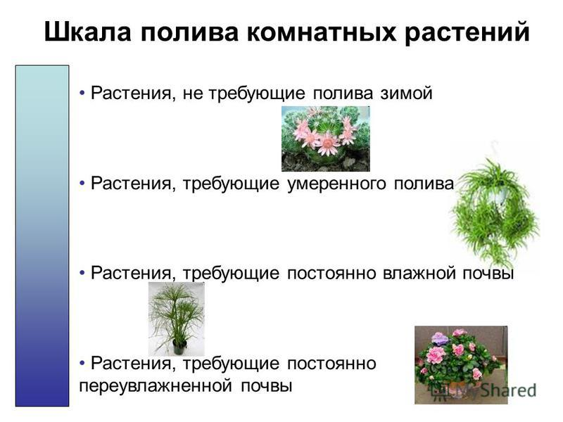 Шкала полива комнатных растений Растения, не требующие полива зимой Растения, требующие умеренного полива Растения, требующие постоянно влажной почвы Растения, требующие постоянно переувлажненной почвы