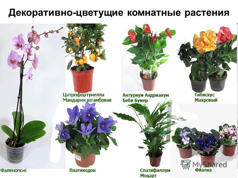 Комнатные цветы которые цветут с