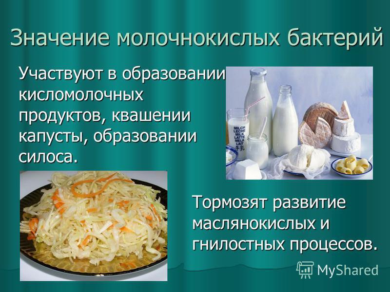 Значение молочнокислых бактерий Участвуют в образовании кисломолочных продуктов, квашении капусты, образовании силоса. Тормозят развитие маслянокислых и гнилостных процессов.