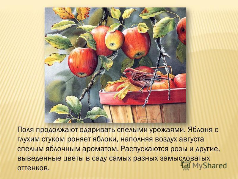 Поля продолжают одаривать спелыми урожаями. Яблоня с глухим стуком роняет яблоки, наполняя воздух августа спелым яблочным ароматом. Распускаются розы и другие, выведенные цветы в саду самых разных замысловатых оттенков.