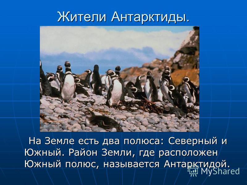 Жители Антарктиды. На Земле есть два полюса: Северный и Южный. Район Земли, где расположен Южный полюс, называется Антарктидой. На Земле есть два полюса: Северный и Южный. Район Земли, где расположен Южный полюс, называется Антарктидой.