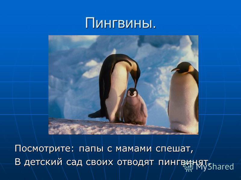 Пингвины. Посмотрите: папы с мамами спешат, В детский сад своих отводят пингвинят.
