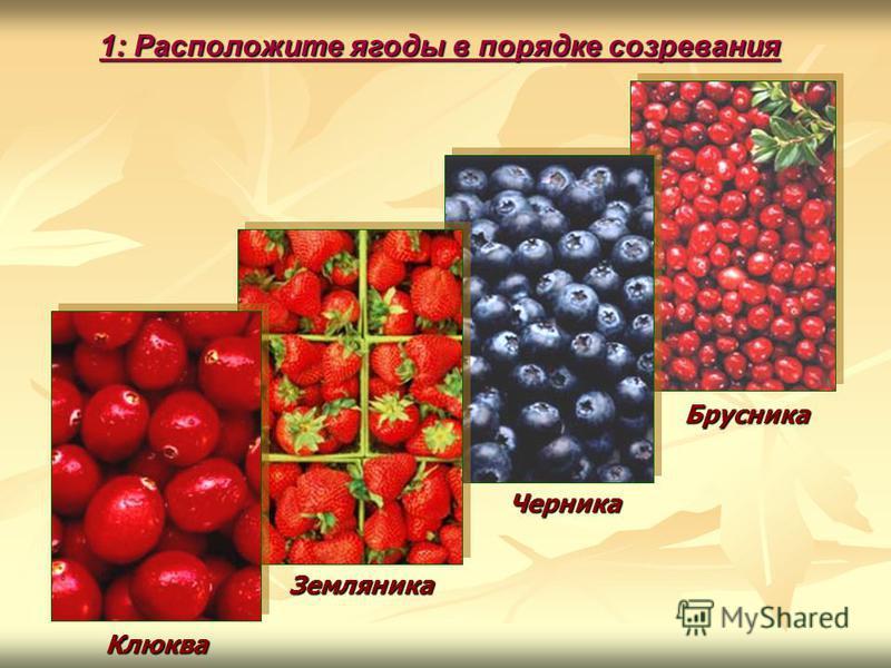 Клюква Земляника Черника Брусника 1: Расположите ягоды в порядке созревания