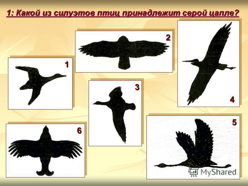 1: Какой из силуэтов птиц принадлежит серой цапле? 1 6 4 3 2 5