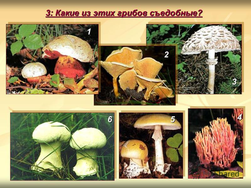 3: Какие из этих грибов съедобные? 1 2 56 4 3