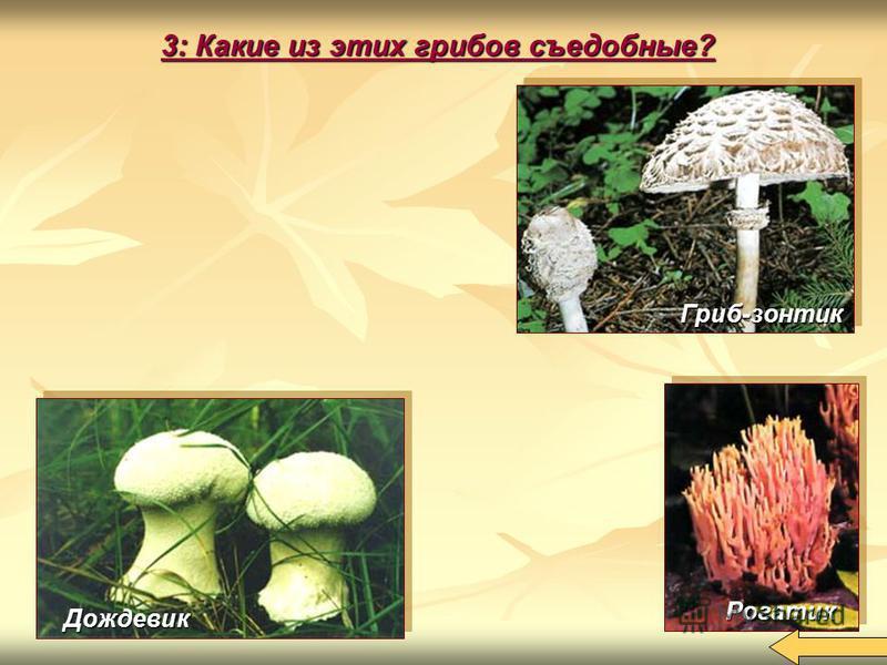 3: Какие из этих грибов съедобные? Дождевик Рогатик Гриб-зонтик