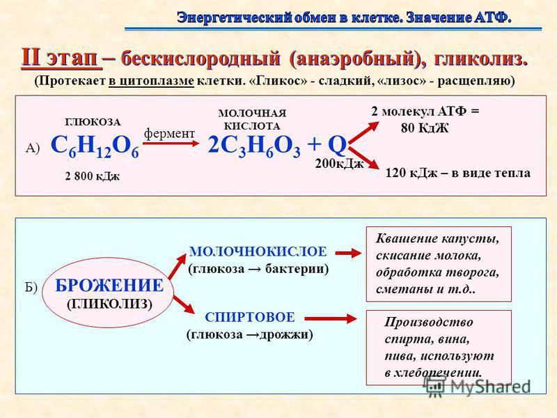 II этап – бескислородный (анаэробный), гликолиз. II этап – бескислородный (анаэробный), гликолиз. (Протекает в цитоплазме клетки. «Гликос» - сладкий, «лизос» - расщепляю) А) C 6 H 12 O 6 2C 3 H 6 O 3 + Q ГЛЮКОЗА 2 800 к Дж фермент МОЛОЧНАЯ КИСЛОТА 2