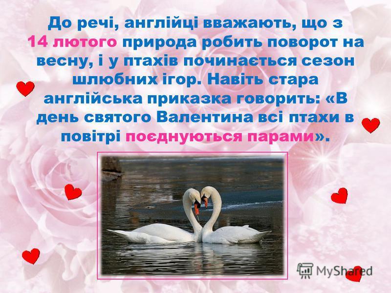 До речі, англійці вважають, що з 14 лютого природа робить поворот на весну, і у птахів починається сезон шлюбних ігор. Навіть стара англійська приказка говорить: «В день святого Валентина всі птахи в повітрі поєднуються парами».