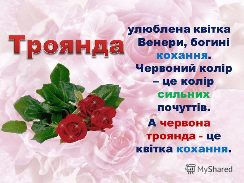 улюблена квітка Венери, богині кохання. Червоний колір – це колір сильних почуттів. А червона троянда - це квітка кохання.