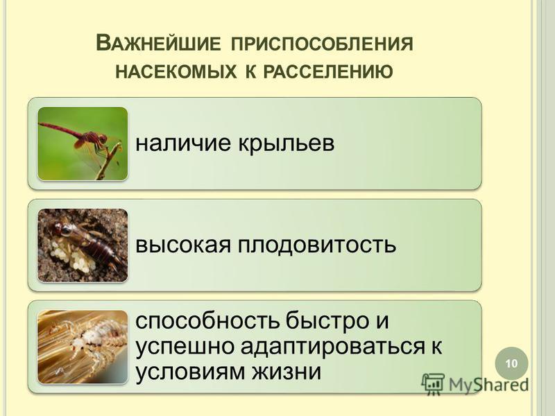 В АЖНЕЙШИЕ ПРИСПОСОБЛЕНИЯ НАСЕКОМЫХ К РАССЕЛЕНИЮ наличие крыльев высокая плодовитость способность быстро и успешно адаптироваться к условиям жизни 10